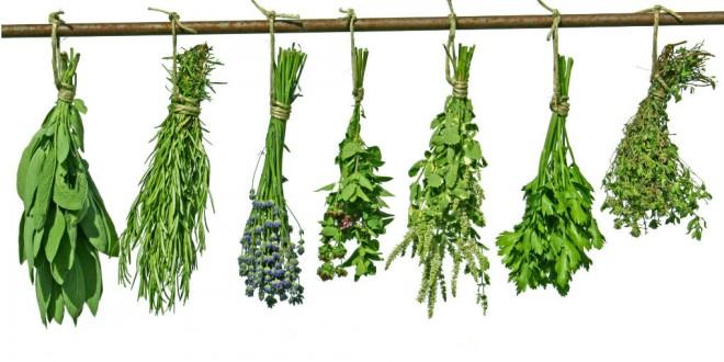 Como conservar las hierbas siempre frescas
