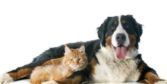 Estudio: los perros aman a sus dueños cinco veces más que los gatos