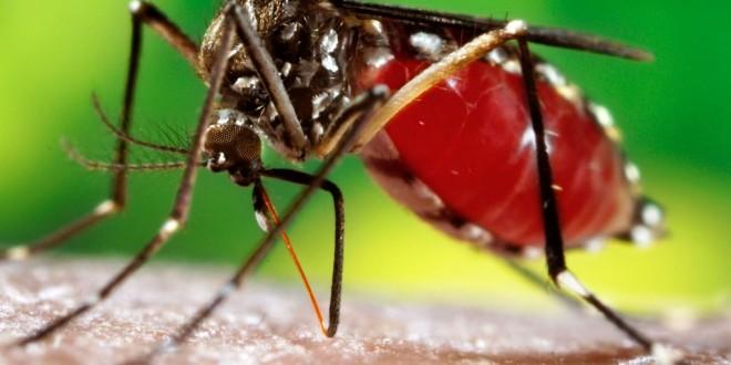 Cómo reconocer los síntomas del dengue