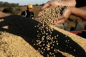 """El Banco Central advierte un horizonte de """"precios deprimidos"""" para los granos"""