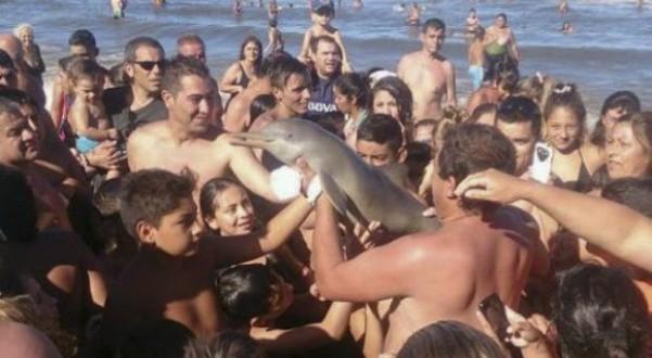 Indignación por muerte de delfín en la playa