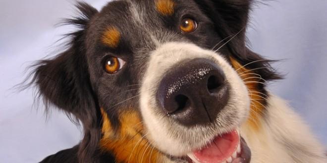 Los perros ayudan a curar el cáncer en personas , enterate cómo