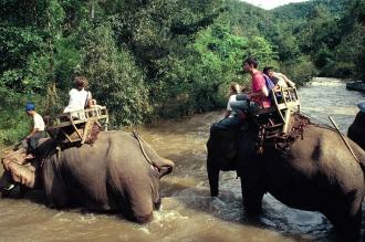Un elefante mató a un turista británico en Tailandia