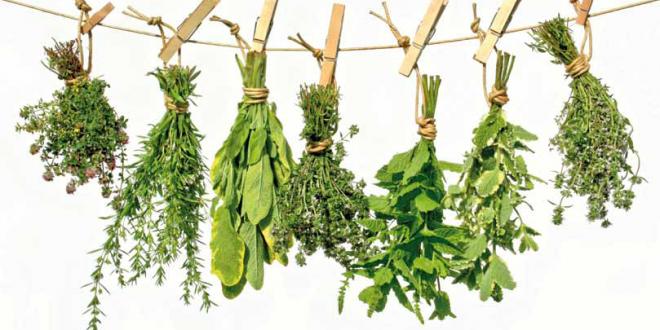 Plantas medicinales que mejoran la inmunidad