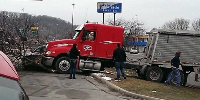 Choca un camión y descubren que era conducido por un perro