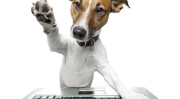 Estudio: Los perros pueden distinguir entre personas egoístas y generosas