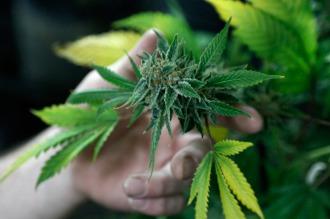 Crece la venta de drogas en Internet, donde la marihuana es lo más vendido