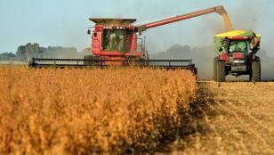 La soja sube 1,4% y opera a u$s 367,08