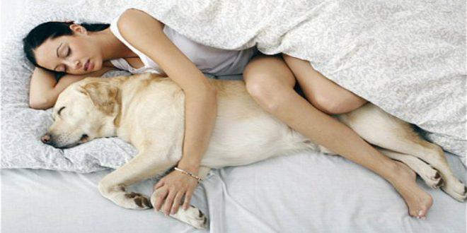 Si tu perro duerme con vos en tu cama, debes leer este artículo