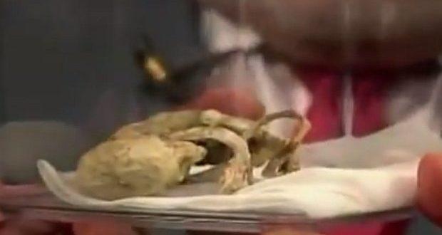 """Video: El cadaver petrificado de un supuesto """"extraterrestre"""""""