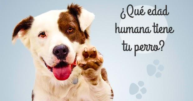 Equivalencia entre edad canina y edad humana.
