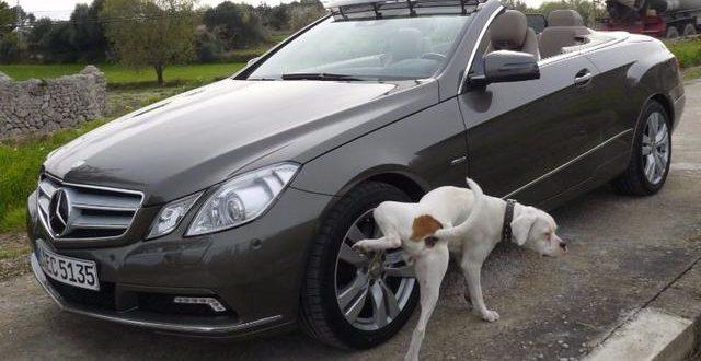 Por qué los perros hacen pis en las ruedas de los autos