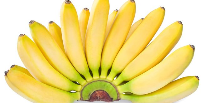 Las bananas dejarían de existir en pocos años