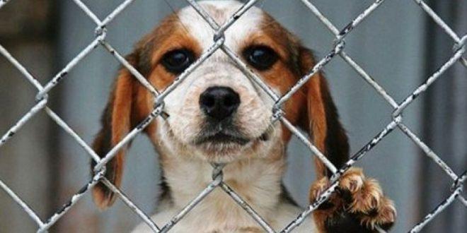 ¿Donde denunciar el maltrato animal?