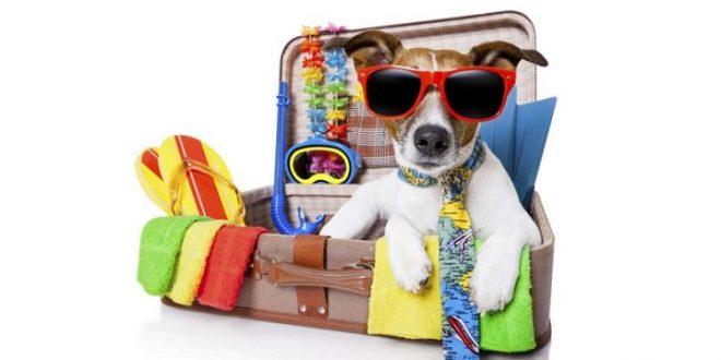 Requisitos para viajar con perros a Uruguay