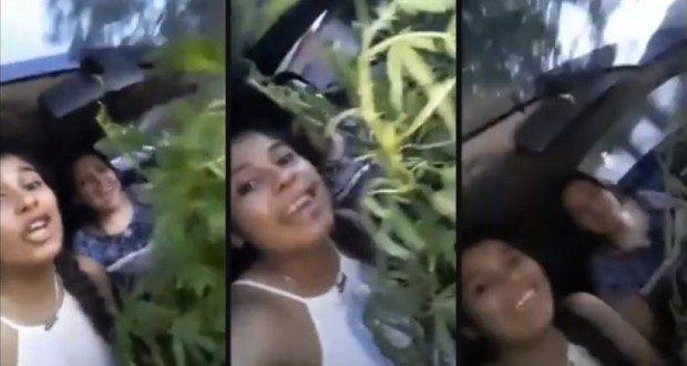 Policías festejando con una planta de marihuana. Mira el video