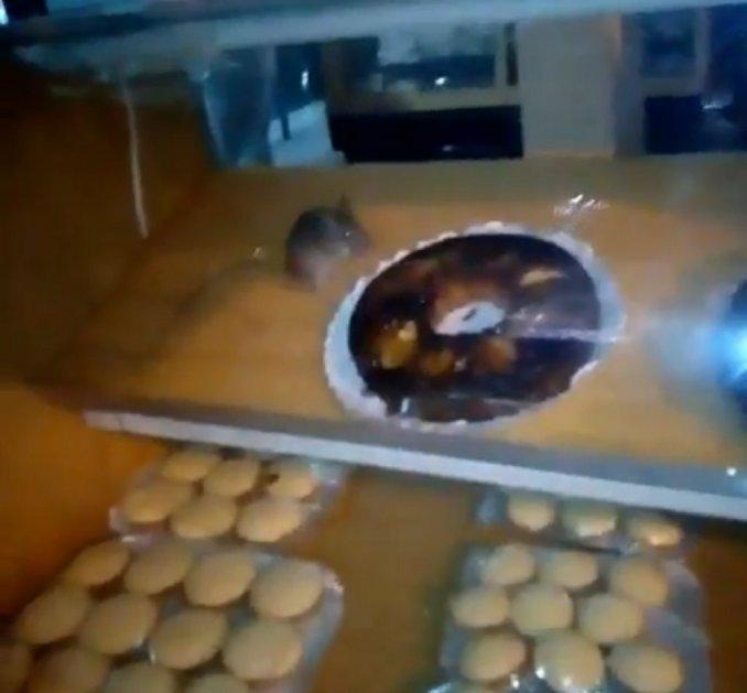 Encontró una rata en el mostrador de a la panaderia. Mira el video