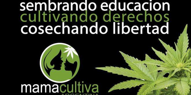 Mamá Cultiva, la ONG que impulsa el cultivo de marihuana