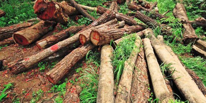 Se redujo 16% la deforestación en la Argentina