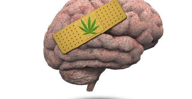 ¿Cómo afecta la marihuana al cerebro?