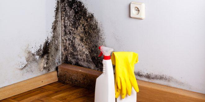 Como eliminar el moho de tu casa