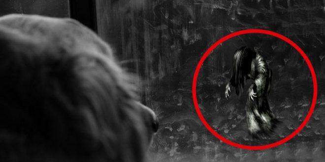 ¿Cómo saber si tu mascota está viendo fantasmas?