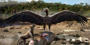 Encuentran restos de aves carnívoras prehistóricas en Mar del Plata