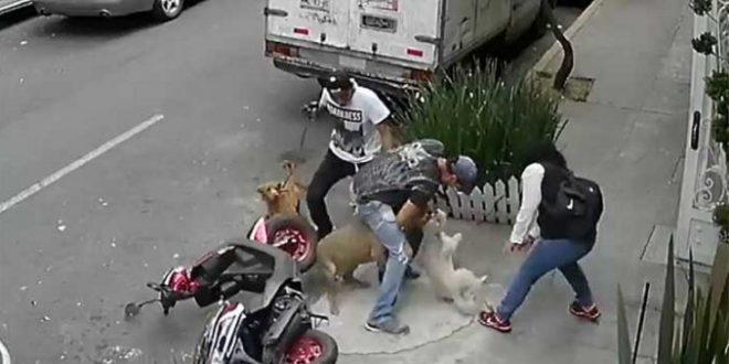 VIDEO: Un pitbull ataca a un perro y a su dueño