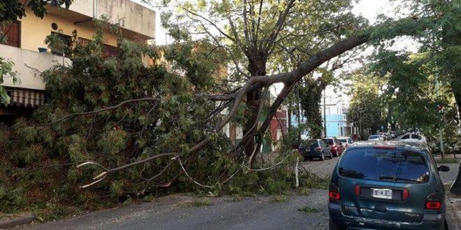 Arboles caídos y heridos por temporal en la Capital y el Conurbano
