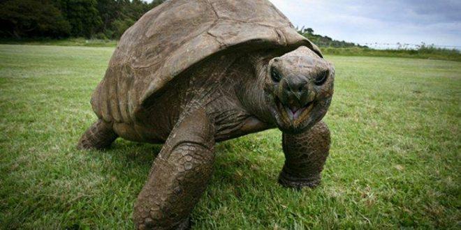La tortuga mas longeva del mundo es gay