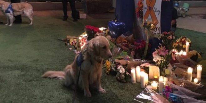 Perros que ayudan a víctimas de la masacre de Las Vegas a superar el trauma