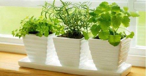 Plantas que atraen energías positivas. Enterate cuales son