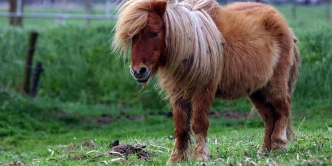 Escrachan a empleado municipal abusando de un pony