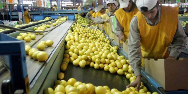 A pesar de los aumentos y altos costos, hay optimismo de los productores en la competitividad del limón
