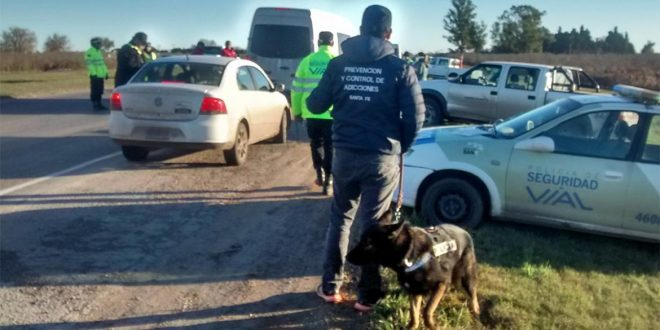 Alarmante: 40% de los automovilistas manejaba bajo efectos de estupefacientes en Rosario