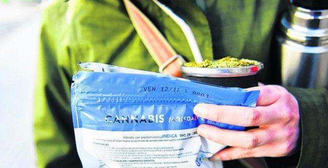 El cannabis legal más barato está en Uruguay
