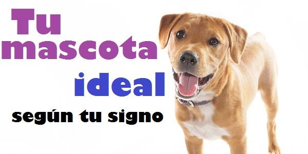Cual es la mascota ideal según tu signo