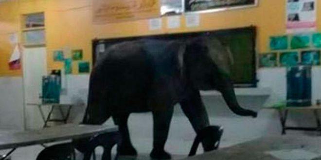 Un elefante ingresó a un colegio y causó pánico