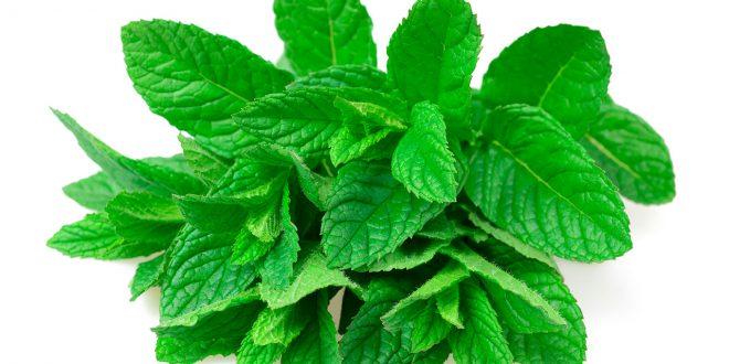 Como utilizar las hojas de menta ? Distintos usos de la menta fresca o seca
