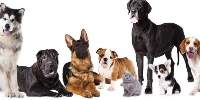 Las razas de perros más buscadas por los argentinos