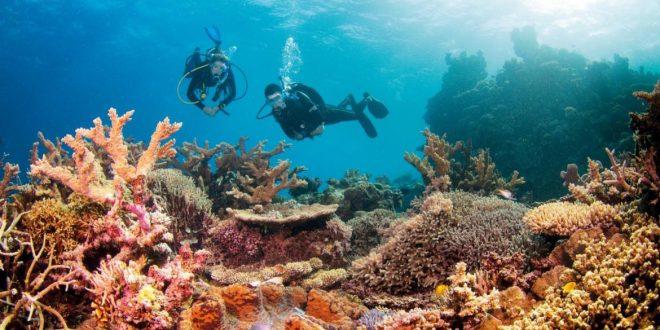 Australia está invirtiendo $ 379 millones para salvar la Gran Barrera de coral
