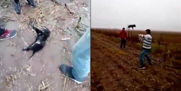 Video indignante : Se filmaron torturando a un cachorro hasta matarlo