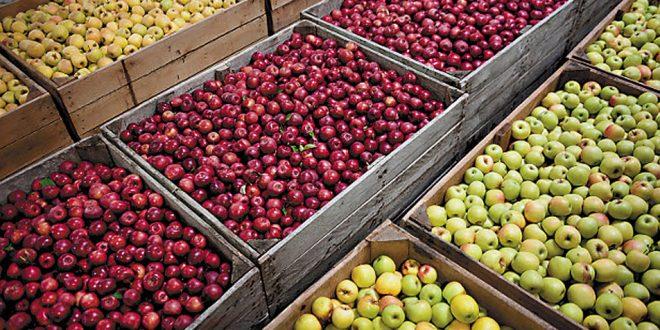Aumentan las exportaciones de manzanas y peras a la India