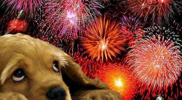 Lanzan fuegos artificiales sin ruido ni explosiones para no molestar a los animales