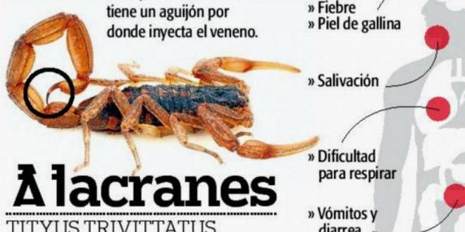 Cómo prevenir picaduras de Alacranes