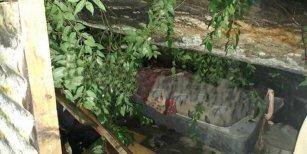 La Plata: por el temporal, un árbol cayó sobre una casa y mató a padre e hijo