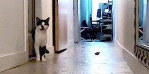 Quería saber qué hacía su gato cuando estaba solo, lo grabó y el video se hizo viral