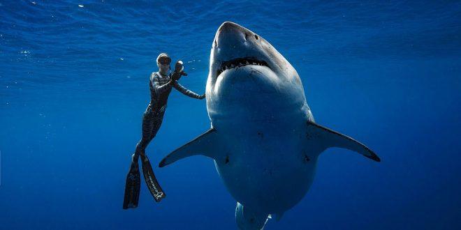 El tiburón blanco más grande jamás filmado