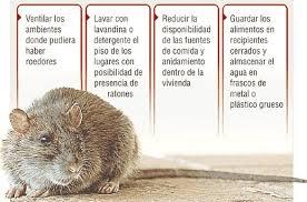 Recomendaciones a seguir para prevenir el hantavirus