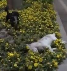 Video : Perro se niega a abandonar a su amiguito atropellado
